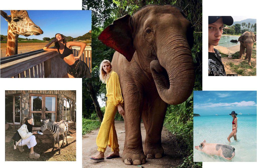 Зебра, жираф, слон: короли африканской фауны вдохновляют дизайнеров и помогают лечить людей
