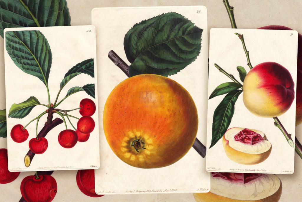 Полезны ли фрукты на самом деле? И сколько их можно есть?