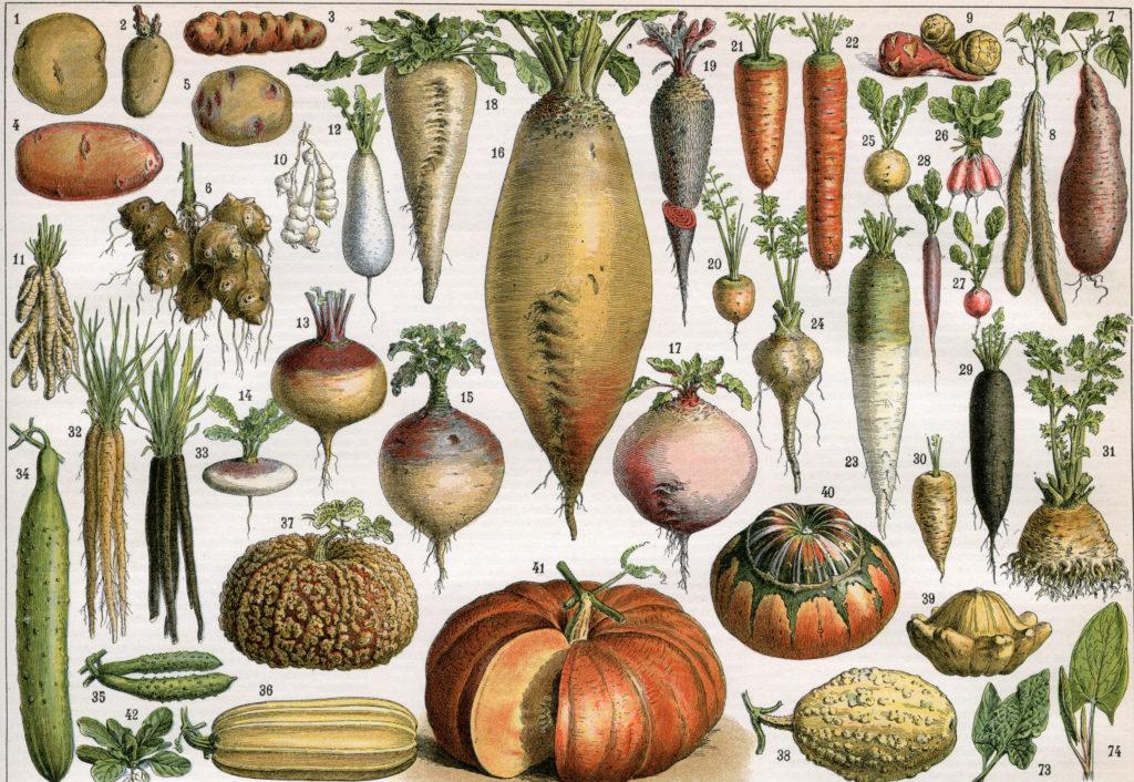 Рецепт салата от старения, а также другая полезная еда для генов