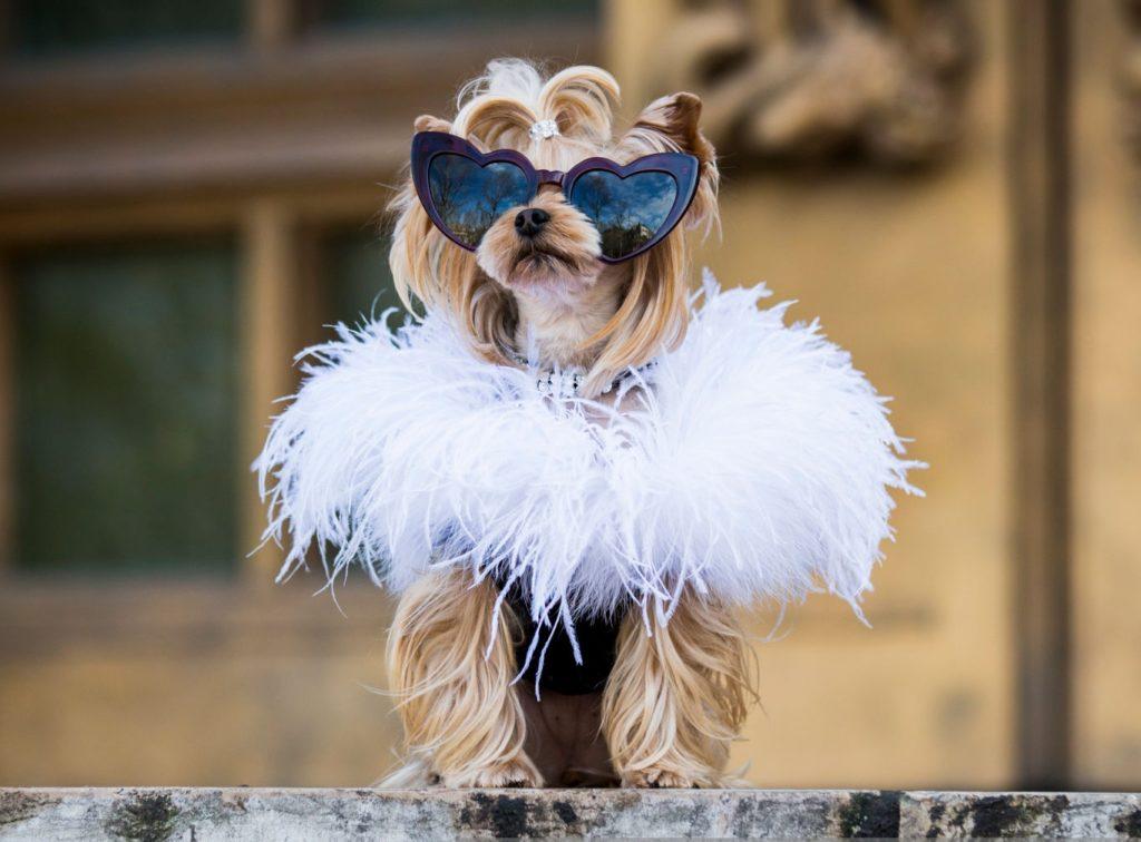 Стильный пес: модная одежда для собак – новый тренд