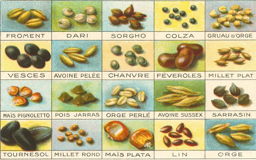 Хотите оздоровить свой рацион? Ешьте больше семян!