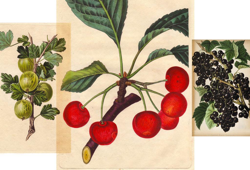 Как за три секунды узнать, насколько полезны ваши ягоды?